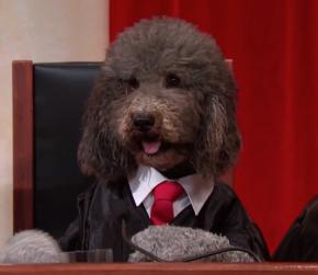 John Oliver's Supreme Court, DoggieStyle