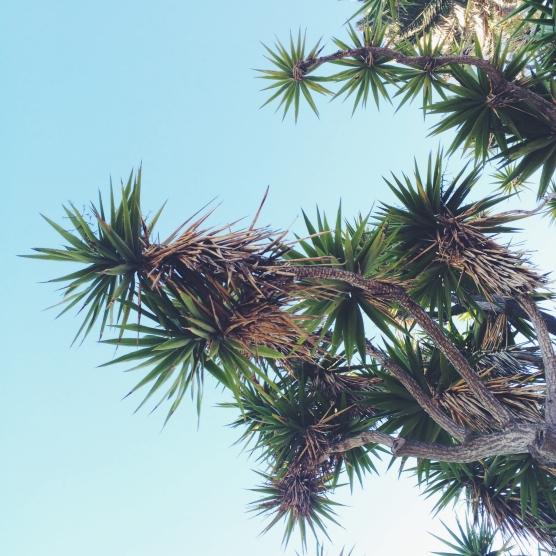 Looking up in Santa Monica