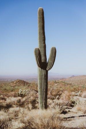 Sonoran Desert, AZ